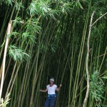 Hana in the bamboo forest